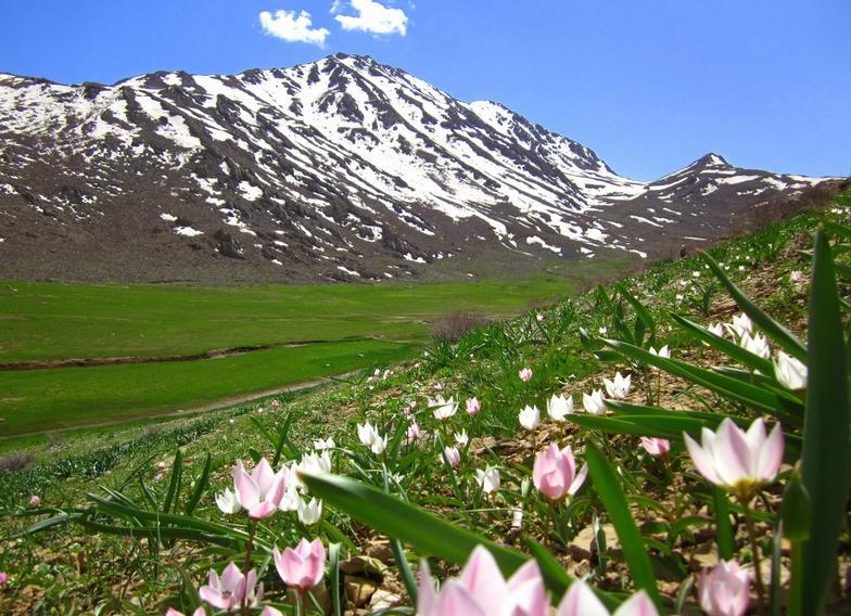 chy_zagros-mountain