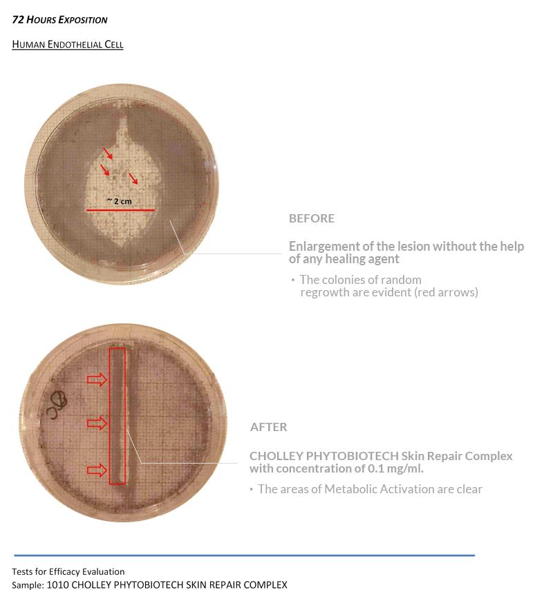 Test_efficacy_CHOLLEYPhytobiotechSkinRepairComplex