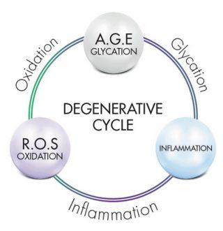 Phytobiotech_Degenerative_cycle