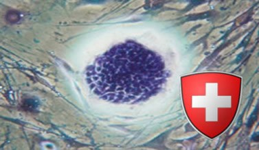 swiss_stem_cells_v2